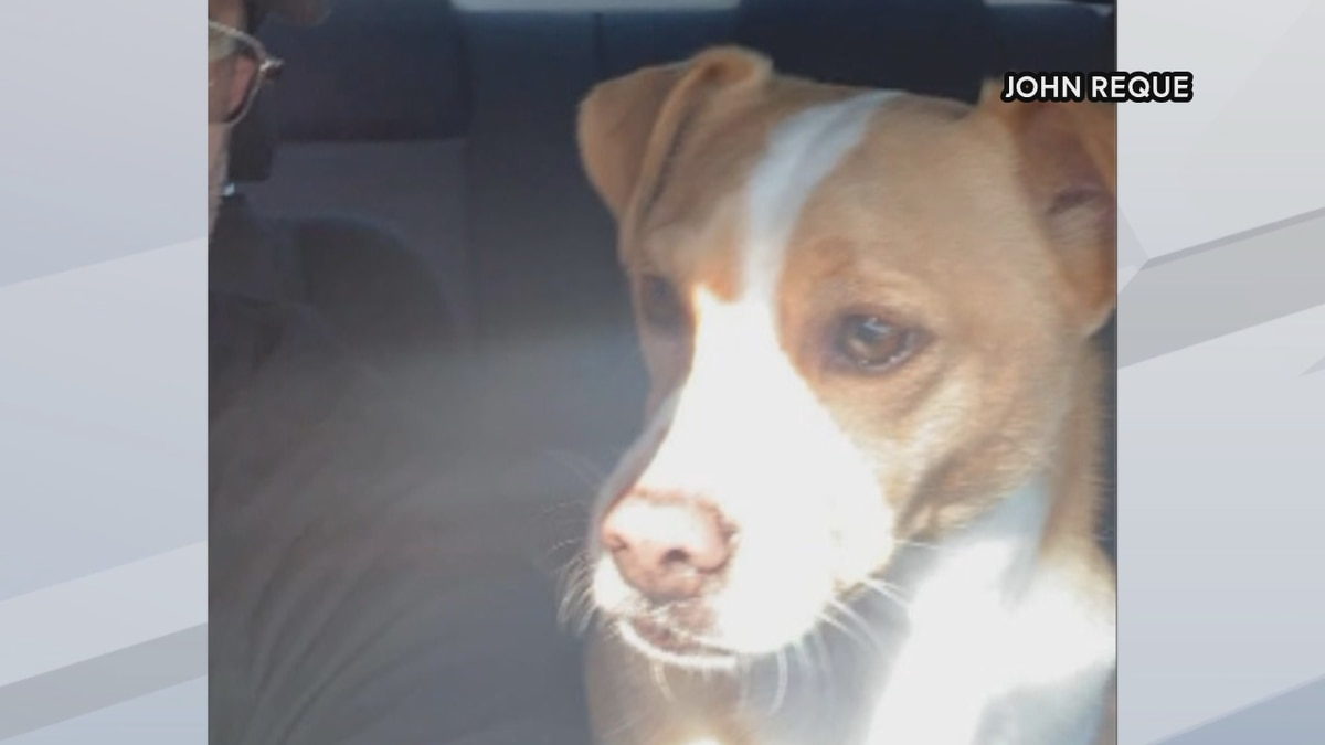 delivery driver returns lost dog home