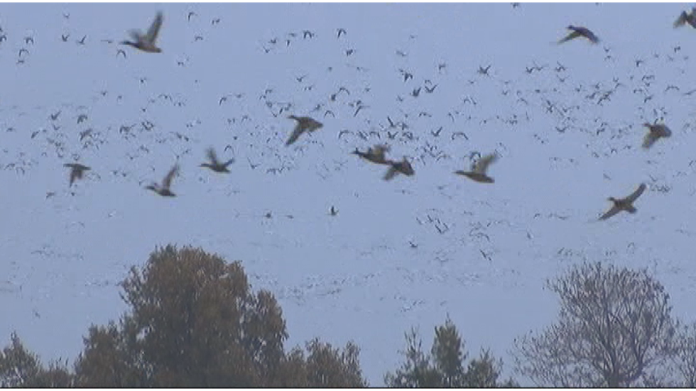 State creates new Open Water Zone for duck hunters