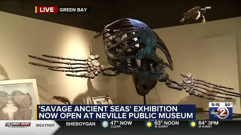 Savage Ancient Seas exhibit at the Neville.