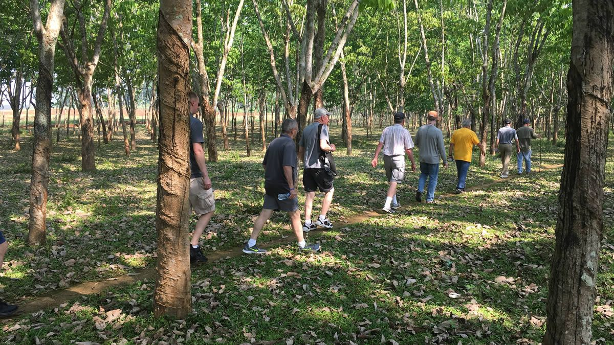 Vietnam veterans walk through rubber trees (WBAY photo)
