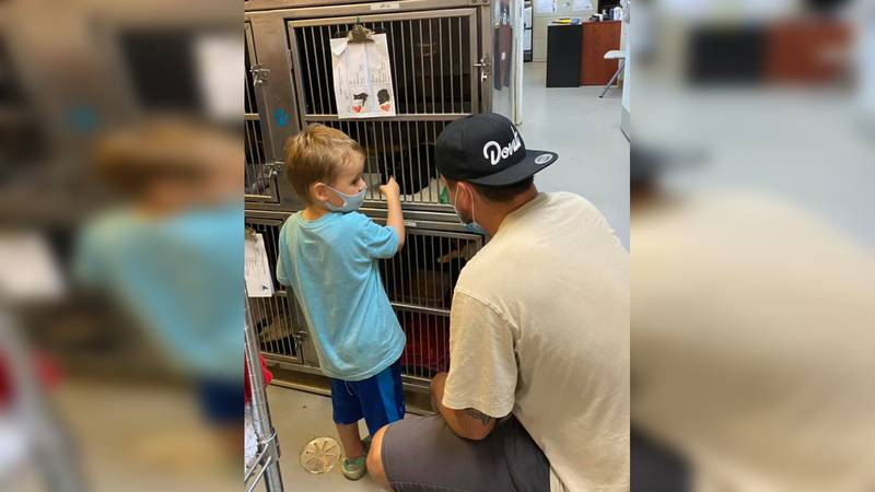The little boy wanted to make sure the kitten's mom was okay with his family adopting her baby.
