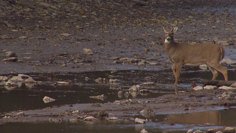 A young buck in Outagamie County
