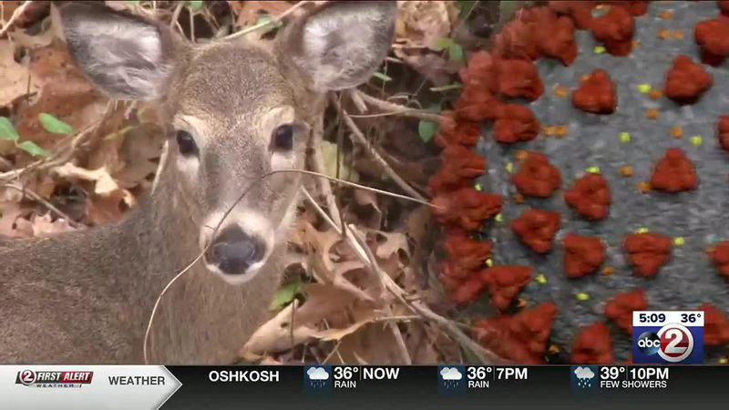 Number of deer harvested in opening weekend up from 2019