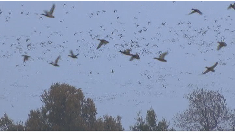 Duck hunting on the Bay of Green Bay is growing in popularity.