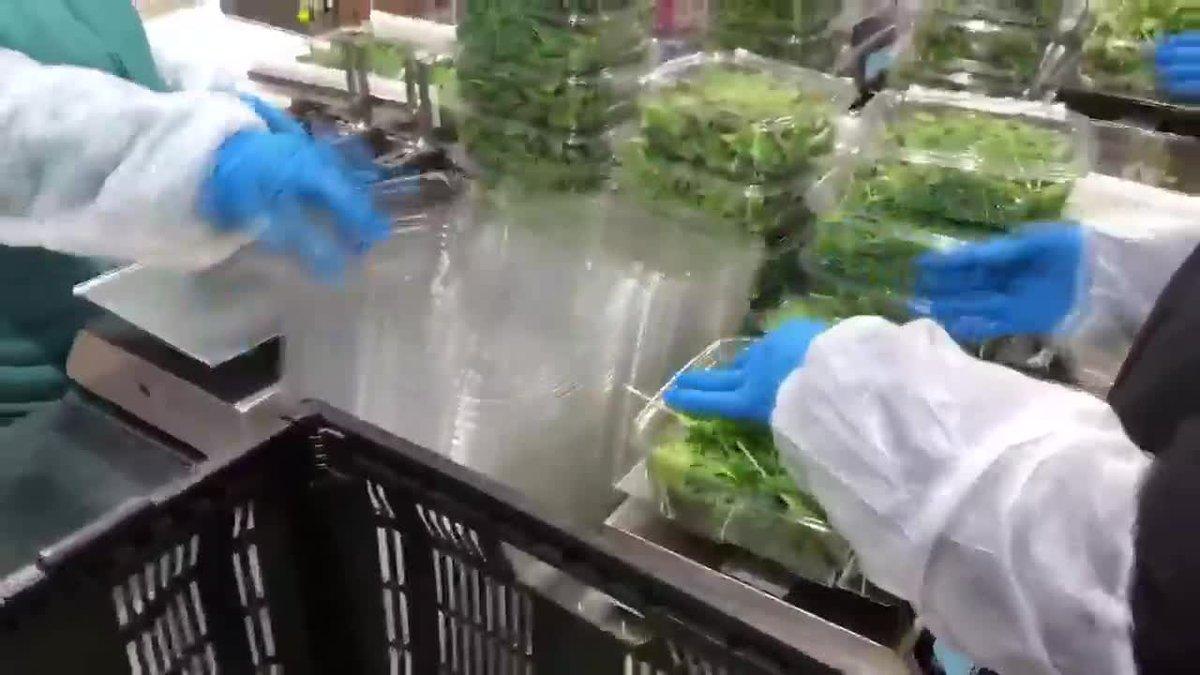 BrightFarms Ohio greenhouse (file)