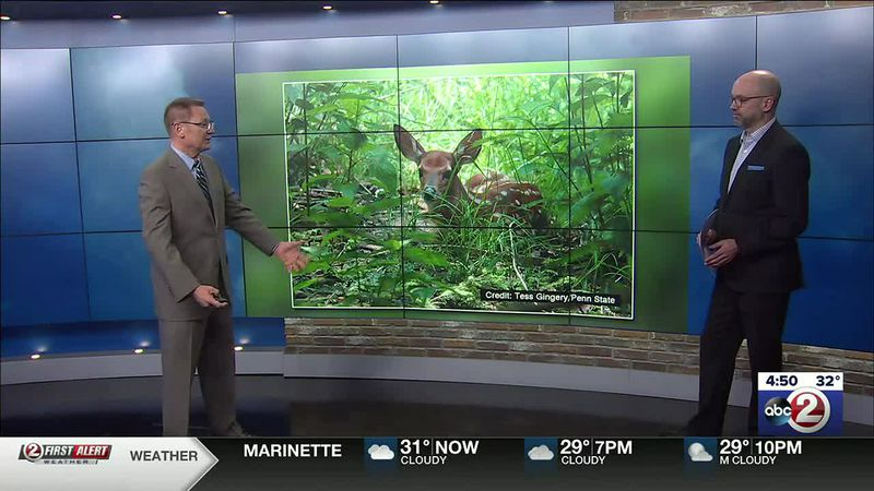 Brad Spakowitz discusses the life span of fawns