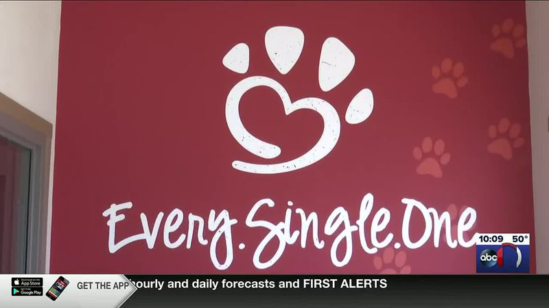 Animal shelters seeing pets coming back after high adoption rate last year