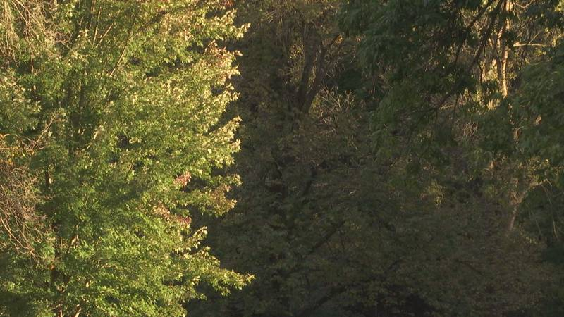 Leaves changing colors at Pamperin Park in Green Bay.