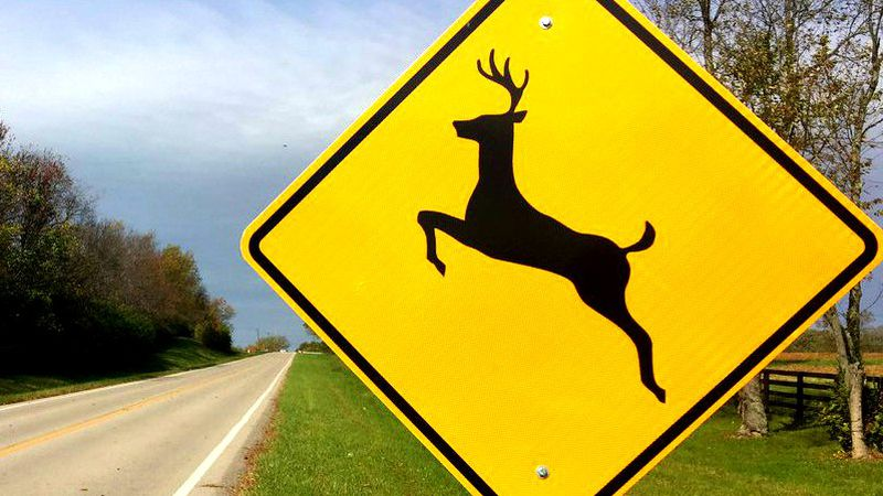 Deer-mating season can make it more dangerous to drive.