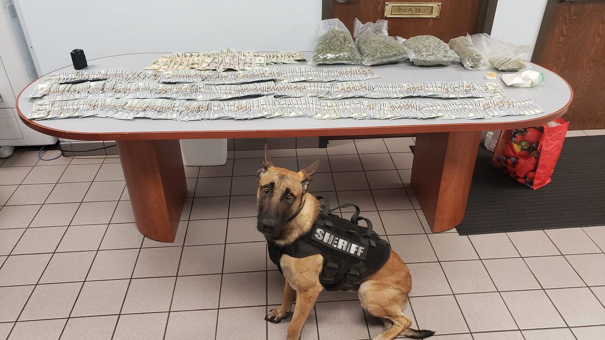 Menominee County Sheriff Dept. K9 Ruger sits in front of the drugs and cash found during a...