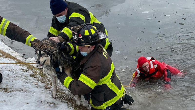 A husky named Jax fell through the ice on a frozen pond.