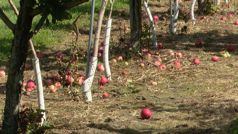 First day of fall means apple picking season