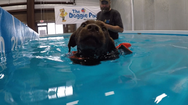 The Doggie Paddle is an indoor swimming pool for dogs in Oshkosh.