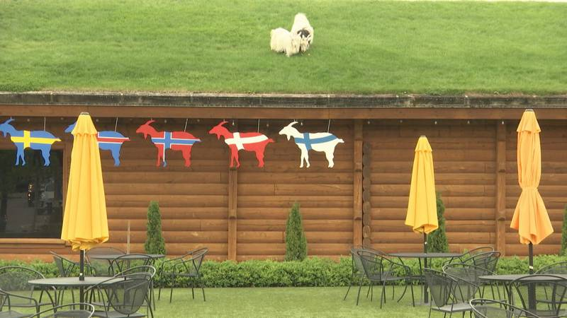 Al Johnson's Restaurant and Butik in Sister Bay, Wisconsin is knowing for putting goats on its...