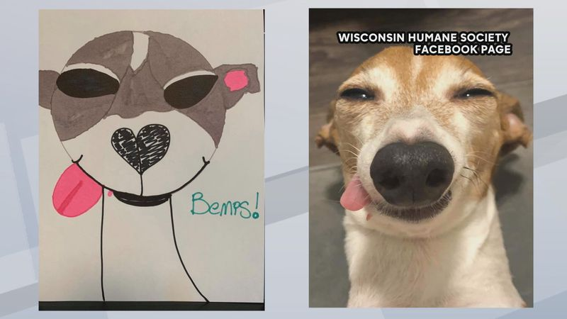 An example of the poor pet photo contest by the Wisconsin Humane Society.